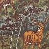 Birch and Deer