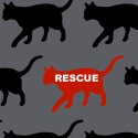 Cats, on gray